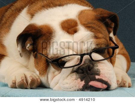 Bulldog Wearing Glasses