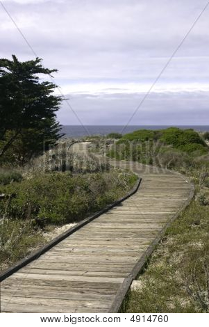 Boardwalk And Monterey Cypress (cupressus Macrocarpa) Vertical