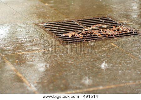 Rainy Drain