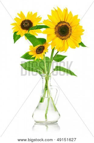 bouquet flowers of sunflower in glass vase isolated on white background