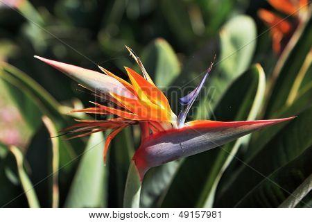 Exotic flower. Flower