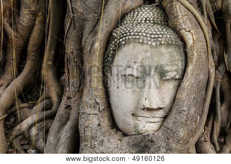 Buddha head in a tree trunk, Wat Mahathat