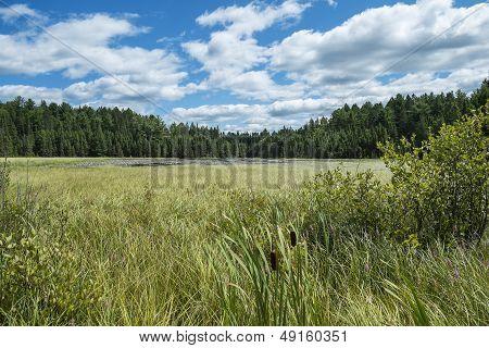 Marshland with Dramatic Sky