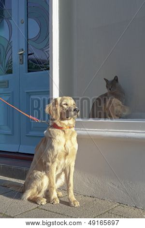 Full length of mixed breed dog sitting by Burmese cat in window display