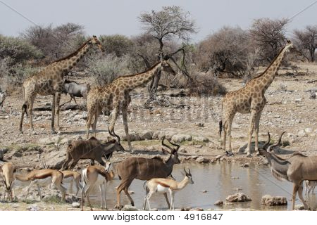 Vida selvagem em Etosha