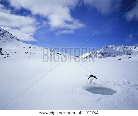 Penguin Looking Down a Hole in the Ice