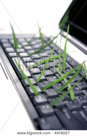 Grass Growing From Computer Keyboard, Metaphor