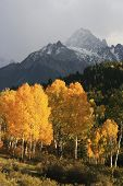 picture of mear  - Mount Sneffels Range with fall color, Colorado, USA