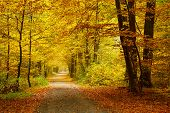 stock photo of foliage  - Pathway in the autumn forest - JPG