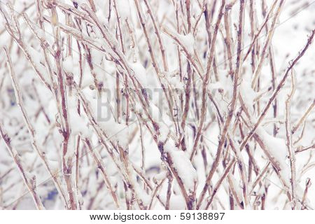 Snowcovered Branch