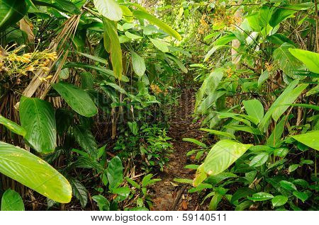 Wild Colombian Darien Jungle