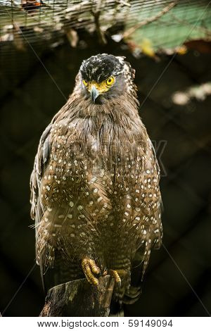 Serpent Eagle sitting in cage zoo
