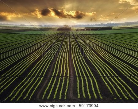Landscape with Field And Beautiful Sky At Sunrise
