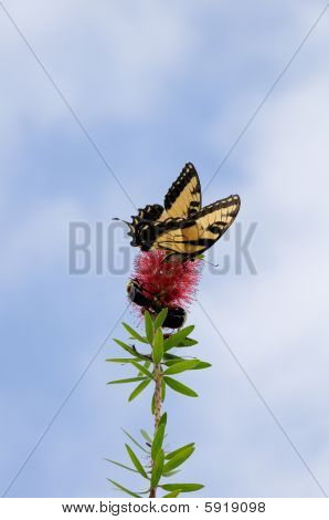 Butterfly And Bees Pollinating