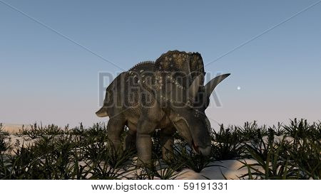 grazing triceratops