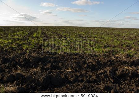 Ploughed Chernozem (black Earth) Field