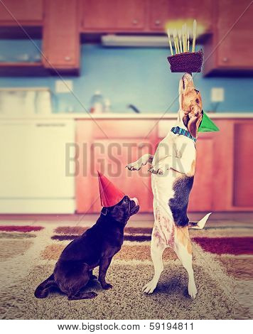 a pug and a beagle with birthday cake and an instagram filter done vintage style for a retro look