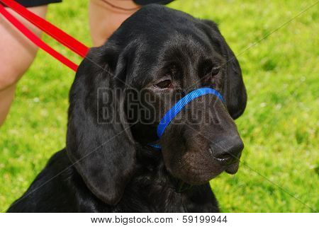 Blood Hound Lab