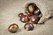 Raw chestnuts with shells
