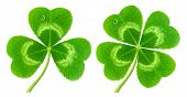 stock photo of four leaf clover  - Three - JPG