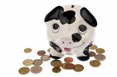 stock photo of cash cow  - Piggy bank with black and white cow spots looking upwards and standing in a variety of Euro coins isolated in white background - JPG