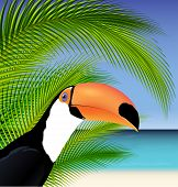 image of toucan  - Vector Exotic trip card with palm tree and Toucan - JPG