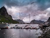 stock photo of reining  - Seagulls flying over boat near moorage in Reine village - JPG