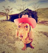 picture of dachshund  -  dachshund dog cowboy in front of a barn  - JPG