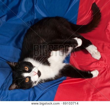 Black Cat With Orange Eyes Lies On Red And Blue
