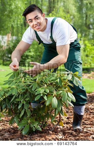 Gardener Taking Care Of Plant
