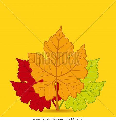 Autumn Leaf Background Square