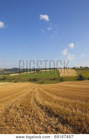 Harvest Time Scenery