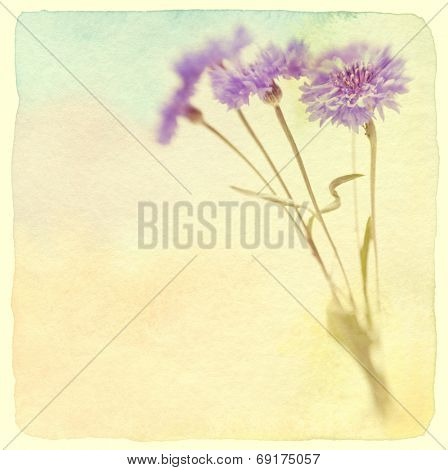 Blue cornflower. Soft focus. Vintage retro style. Made with lens-baby and macro-lens.
