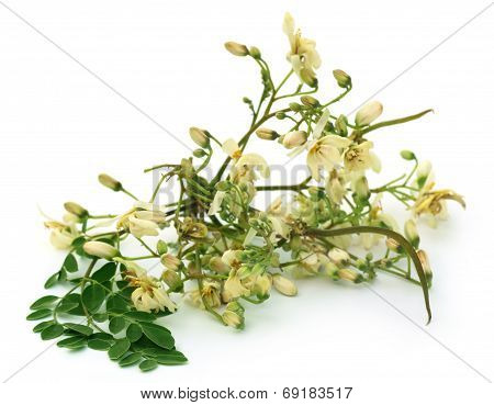 Edible Moringa Flower With Green Leaves