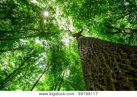 forest trees. nature green wood sunlight backgrounds. focus on tree