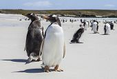 stock photo of falklands  - December 25th 2011 
