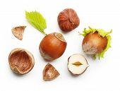 stock photo of hazelnut  - Forest nuts hazelnuts isolated on white background - JPG