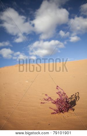 pink plant in the desert