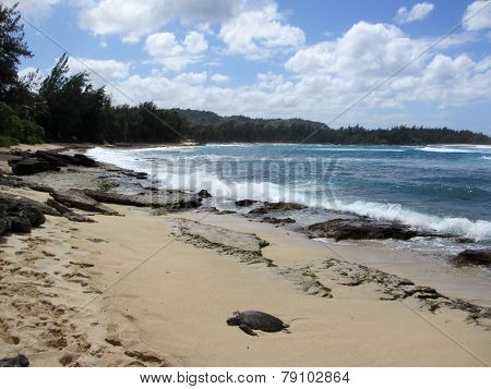 Turtle Rest On Beach As Waves Crash At Turtle Bay With Trees Lining The Coast And Mountain In Backgr