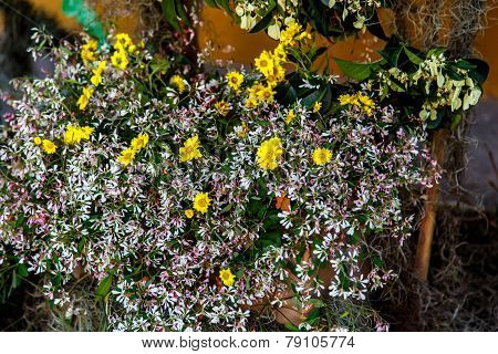 Small Yellow Flowers From Decoration