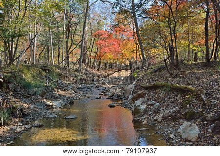 Autumn Woodsy River