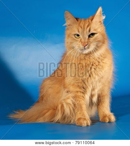 Ginger Fluffy Cat Sitting On Blue