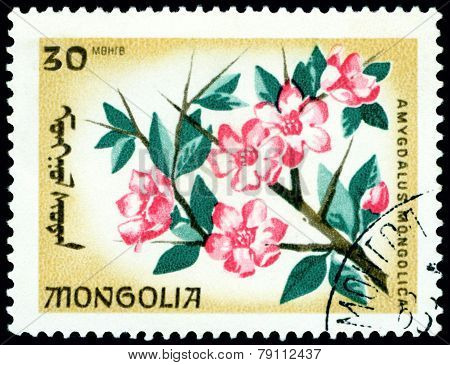 Vintage  Postage Stamp. The Flowerses Amygdalus Mongolica.