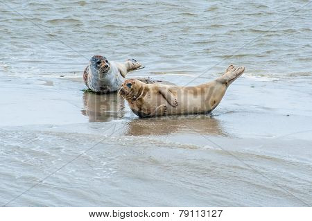 Wadden Sea Seals