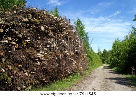 Stack Of Wood Fuel By Forest Road