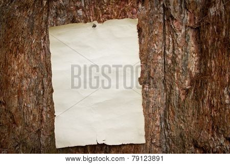 Paper Nailed To A Tree