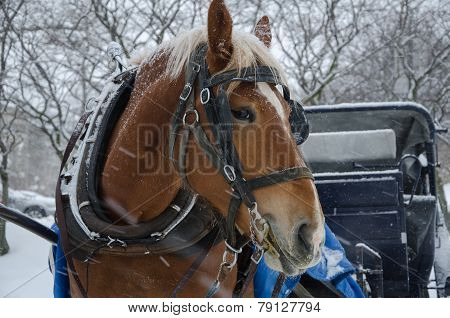 Horse in blizzard