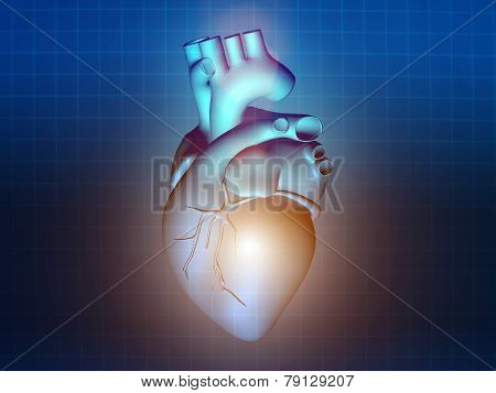 Heart Disease 3D Anatomy Illustration Blue