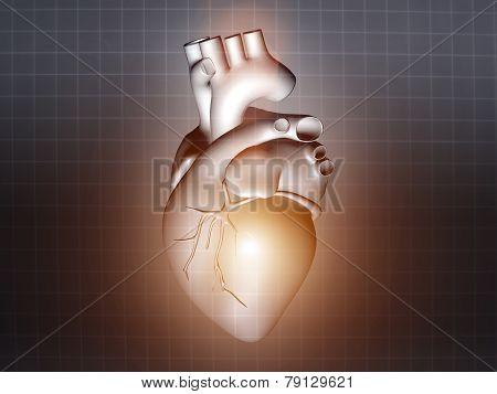 Heart Disease 3D Anatomy Illustration Gray