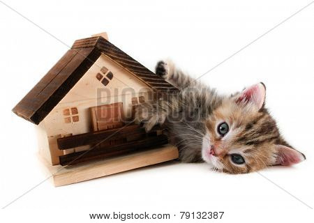 Cute kitten plays with a model house on white background